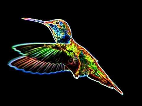 Hyperbird (The Trashmen