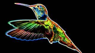 """Hyperbird (The Trashmen """"Surfin"""