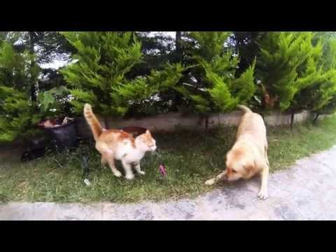 Dog vs Cat Slow motion 120fps