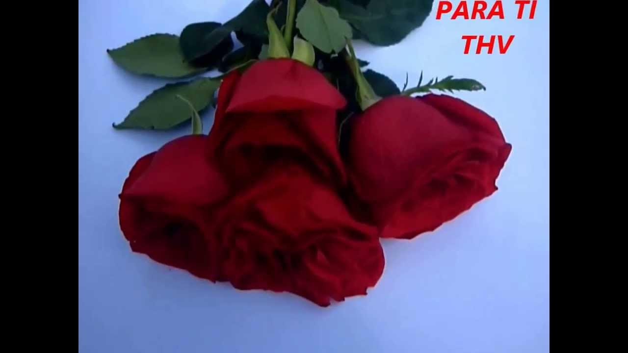 Rosas Rojas Para Ti Youtube