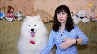 Глазами животных, выпуск 248 (Психолог Юлия Иванова о правильном отношении к животным)