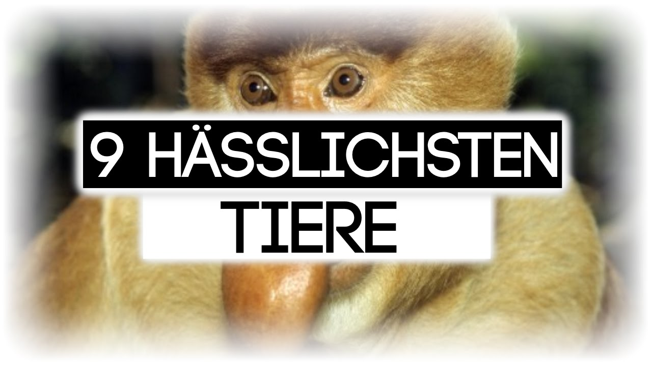 You Tube Tiere