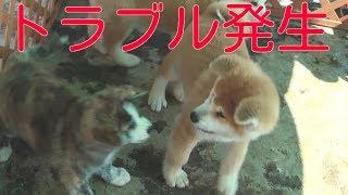 ほのぼのとして秋田犬の子犬を見ていたら・・