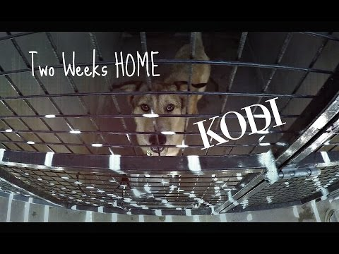 2 Weeks Home [Kodi]