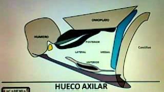 3.1.3 HUECO AXILAR
