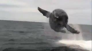 基思就在船前跳下