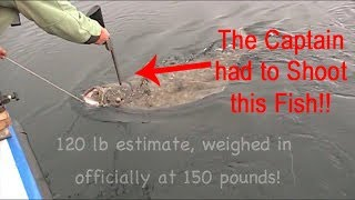 150 Pound Alaska Halibut!!!!
