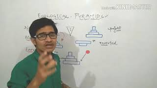 Ecological pyramids: pyramid of energy, biomass and number explained. thumbnail