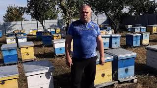 Итоги сезона 2019 - Карника, Бакфаст, Карпатка и местная.