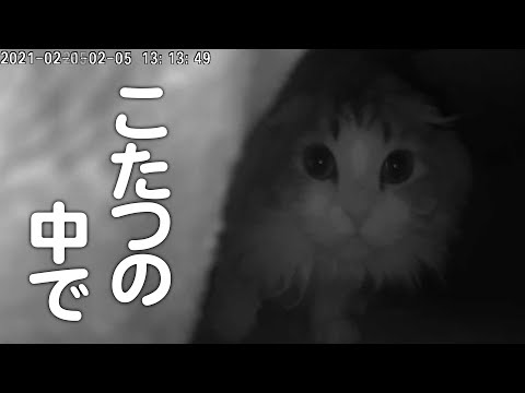 留守番中のこたつの猫を隠し撮りしてみた※暗視カメラ映像