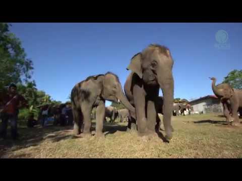 Water tank for Elephants