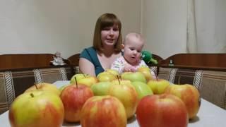 Яблочная диета. Часть 3. День 1. Эксперимент на себе.