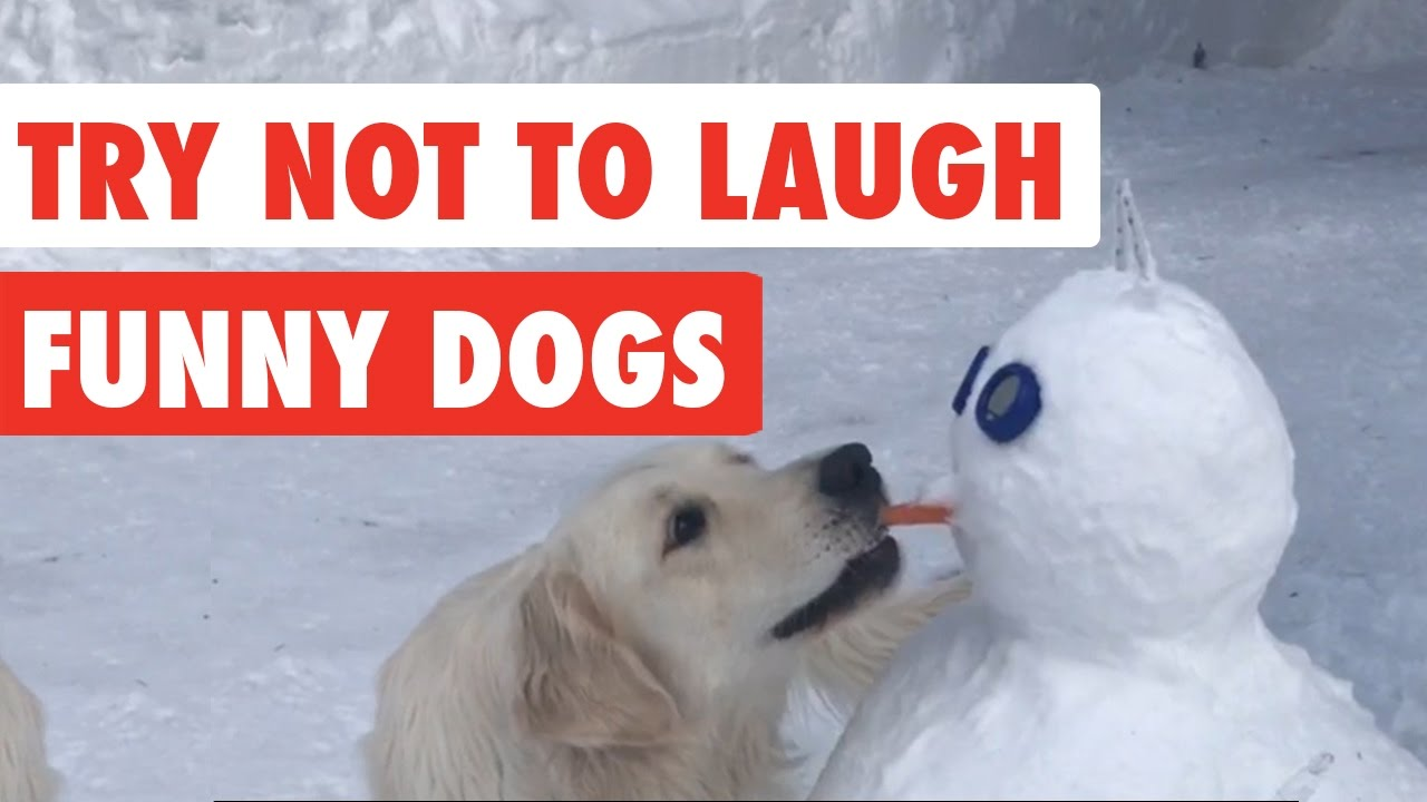 Image of: Compilation 2018 Try Not To Laugh Funny Dog Video Compilation 2017 Youtube Try Not To Laugh Funny Dog Video Compilation 2017 Youtube