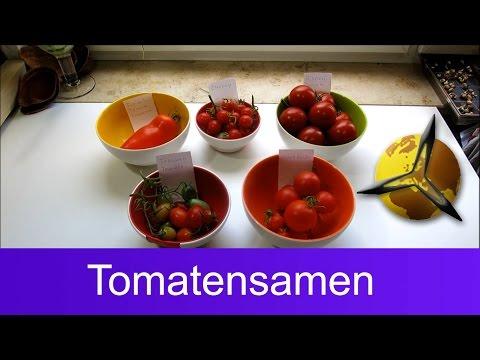 Tomatensamen gewinnen: Saatgut für Tomaten selber machen