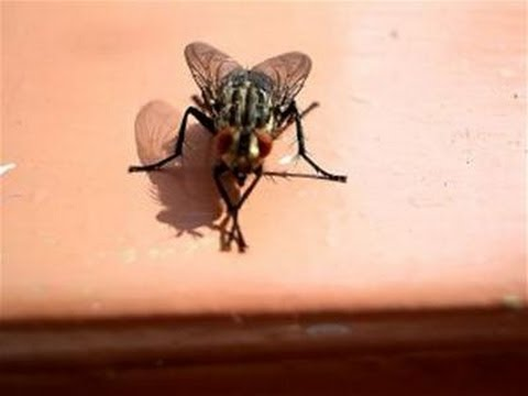How To Get Rid Of A House Fly Infestation