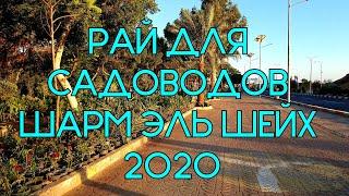 МАГАЗИН РАСТЕНИЙ ШАРМ ЭЛЬ ШЕЙХ 2020 ЦЕНЫ И АССОРТИМЕНТ