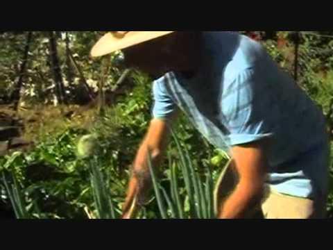 Organic Gardening - Grow Fresh Organic Vegetables