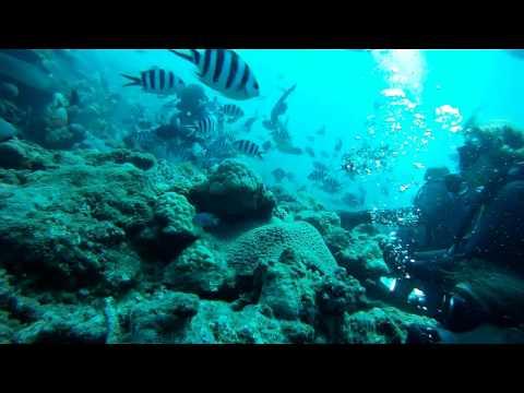 Fiji Shark Dives HD