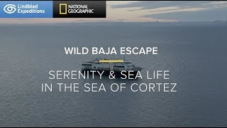 Wild Baja Escape Baja California Lindblad Expeditions-National Geographic