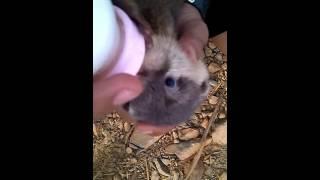 [5.46 MB] otter baby jitot bonding,,,, (milo)