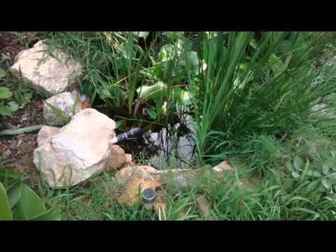 Diy koi pond filter water garden bog filter youtube for Garden pond no filter