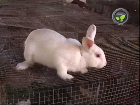Rabbit Farming