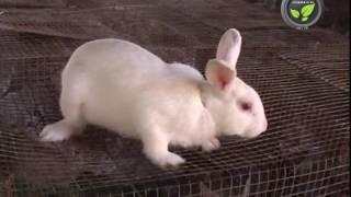 Video Rabbit Farming download MP3, 3GP, MP4, WEBM, AVI, FLV Oktober 2018