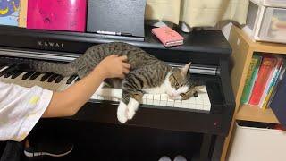 ピアノでやりたい放題な猫がかわいい
