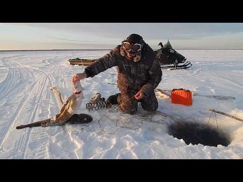 зимняя рыбалка - 2017-11-21 11:09:08