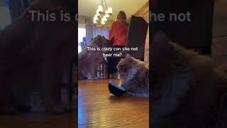 Cat Bangs Their Bowl On Floor As Owner Sits Down To Ear Food  11867472