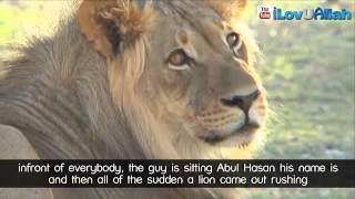 Lion Vs True Believer ᴴᴰ   True Story