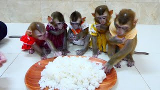 [ P00r Dinner ] Mom Comfort 5 Sibling Mnkeys With Big Plate Of Rice,