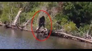 Los 5 animales más extraños y misteriosos captados en video
