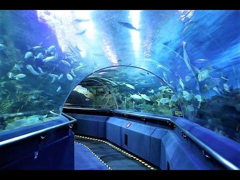 Aquaria KLCC - Kuala Lumpur, A World-class Aquarium