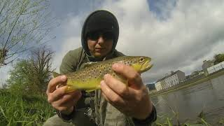 Fly fishing in Ireland 3:0 - The end of season 2018