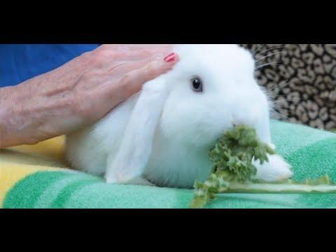 Pros & Cons of Having a Pet Rabbit | Small Pets