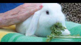 Pros & Cons Of Having A Pet Rabbit | Small Pets