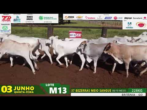 LOTE M13
