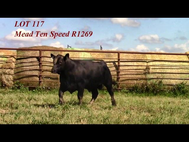 Mead Angus Lot 117