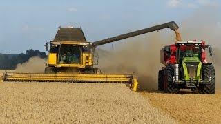 Wielkie Żniwa Stary Jaworów 2014 Milikowice | Big Harvest in Poland | 5x Lexion | 2x CR 9090