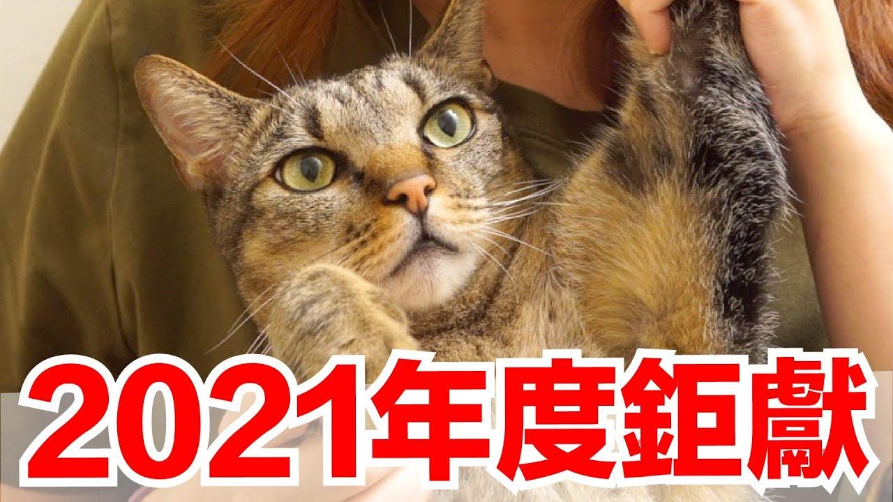 【好味小姐】2021年度鉅獻,體會養貓的真正原因