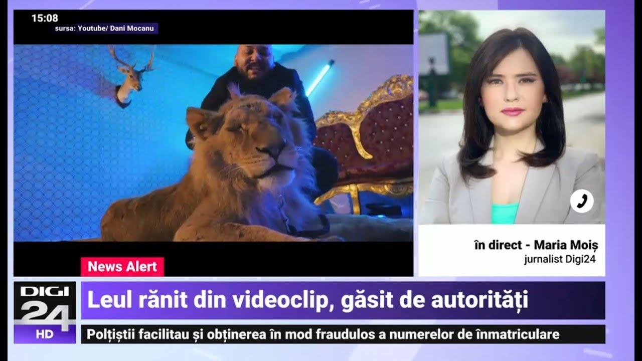 Leul din videoclipul manelistului Dani Mocanu a fost găsit și confiscat de polițiști - Digi24