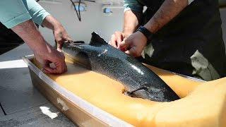 King Salmon Project: Lake Ontario