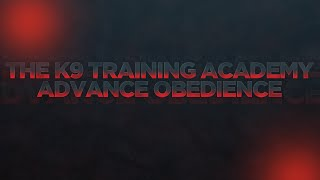 Professional Dog Training - The K9 Training Academy - Turan - Advance Obedience