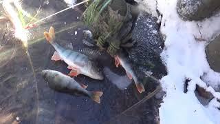 Первый лёд Зимняя рыбалка