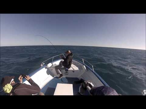 Fly Fishing For Bluefin Tuna Oktober 2016