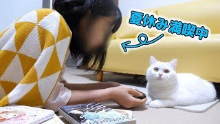 うちのもふ猫と妹の夏休みの過ごし方が面白すぎた…! thumbnail