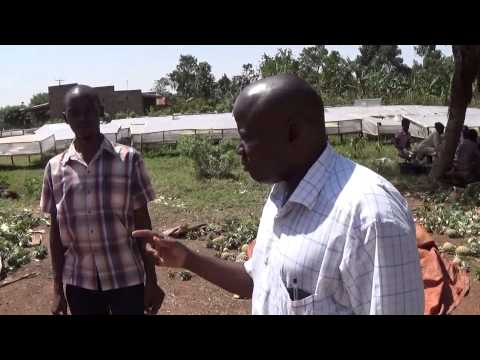 Uganda: Organic Agriculture, Organic Silage Research under ProGrOV project