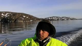 Морская рыбалка Дамская и мужская погода Баренцево море