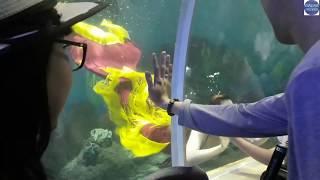 Việc nhẹ lương khủng tại Thủy Cung với nghề cho cá mập sát thủ ăn/shark assassin
